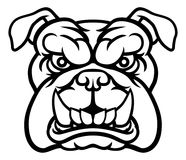 Bulldog Mean Sports Mascot. A mean bulldog dog angry animal sports mascot cartoon character Stock Photography