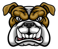 Bulldog Mean Sports Mascot. A mean bulldog dog angry animal sports mascot cartoon character Royalty Free Stock Photography
