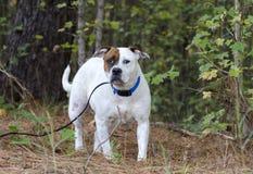 Bulldog mixed breed dog Stock Photo