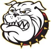 Bulldog mongrel dog head angry Royalty Free Stock Photography