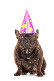 Bulldog with a party head isolated on white background Stock Photo