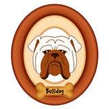 Bulldog Portrait, Dog Bone Pet Tag, Wood Frame. Bulldog dog portrait in cherry wood mat frame, dog bone pet treat tag label,  on white background. EPS8 Stock Photos