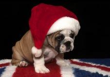 Bulldog royalty free stock photos