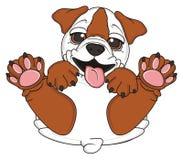Bulldog puppy sit Stock Photography