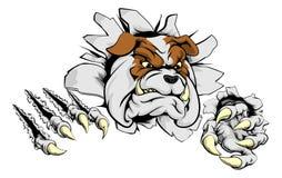 Bulldog ripping through background Royalty Free Stock Photos