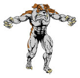 Bulldog scary sports mascot. An illustration of a Bulldog scary sports mascot with claws out Royalty Free Stock Photography