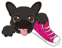 Bulldog with shoes Royalty Free Stock Photos