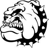 Bulldog Side View. Tough pet bulldog head mascot, isolated on white Royalty Free Stock Photo