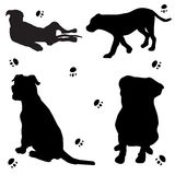 Bulldog silhouette Royalty Free Stock Images