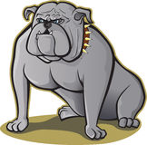 Bulldog sitting Stock Photo