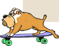 Bulldog on skateboard vector illustration clip-art image Stock Photos