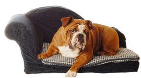 Bulldog sleeping on dog bed Stock Photos