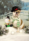 Bulldog and Snowman Royalty Free Stock Image