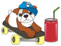 Bulldog with soda and skate Royalty Free Stock Photo