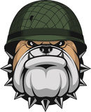Bulldog in a soldier`s helmet Royalty Free Stock Images