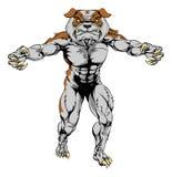 Bulldog sports mascot. A Bulldog man sports mascot character attacking with claws out Stock Photos