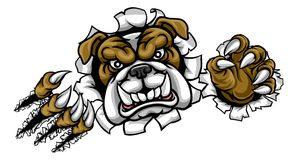 Bulldog Sports Mascot Ripping Through Background. A mean bulldog dog angry animal sports mascot cartoon character ripping through the background Royalty Free Stock Photography