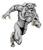 Bulldog sports mascot running. A bulldog man character or sports mascot charging, sprinting or running Royalty Free Stock Image