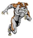 Bulldog sports mascot running. A bulldog man character or sports mascot charging, sprinting or running Royalty Free Stock Photo