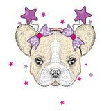 Bulldog sveglio nell'orlo festivo con le stelle Vector l'illustrazione per una cartolina o un manifesto Cucciolo di razza Bello c royalty illustrazione gratis