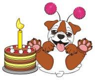 Bulldog with tasty cake Royalty Free Stock Images