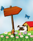A bulldog and the three colorful butterflies Stock Images