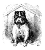 Bulldog watch dog, old print vector illustration