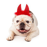 Bulldog wearing devil horns Royalty Free Stock Photo