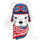 Bulldog wearing a helmet. Racer. Pilot. Royalty Free Stock Image