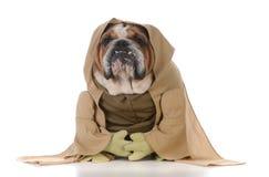 Bulldog wearing munk costume. On white backgroun Royalty Free Stock Photo