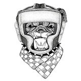 Bulldog Wild boxer Boxing animal Sport fitness illutration Wild animal wearing boxer helmet Boxing protection Image for Stock Photography