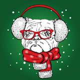 Bulldog in winter headphones. Vector illustration for a card or poster. Print on clothes. Cute puppy. Pedigree dog. Royalty Free Stock Image