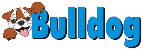 Bulldog with word bulldog Royalty Free Stock Photography