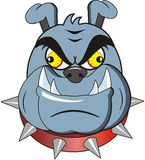 bulldogg Royaltyfri Bild