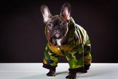 Bulldogg i varma overaller Arkivbild