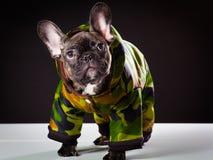 Bulldogg i varma overaller Fotografering för Bildbyråer