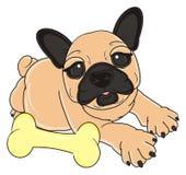 Bulldogg med benet Fotografering för Bildbyråer