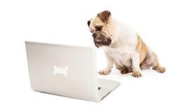 Bulldogg på datoren Royaltyfria Bilder