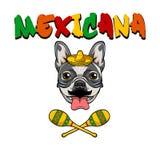 Bulldogg som bär i sombrero med maracas också vektor för coreldrawillustration royaltyfri illustrationer