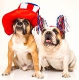 Bulldoggar som kläs för 4th Juli Royaltyfria Foton
