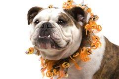 Bulldogge Lizenzfreies Stockfoto