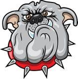 Bulldogge Stockbild