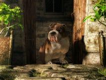 Bulldogge, die eine Tür schützt stock abbildung