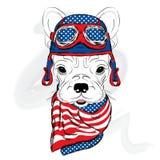 Bulldogge, die einen Sturzhelm trägt racer Pilot stock abbildung