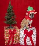 Bulldogge-Elf-Feiertags-Portrait Lizenzfreies Stockfoto