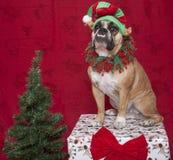 Bulldogge-Feiertags-Elf-Portrait Stockfotografie