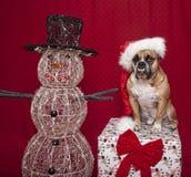 Bulldogge-Feiertags-Portrait mit Schneemann Stockbilder