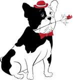 Bulldogge mit stieg lizenzfreie stockbilder