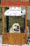 Bulldogge-Portrait Stockfotografie
