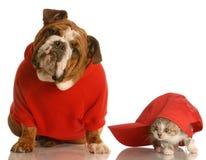 Bulldogge- und Katzespielen Stockfotos